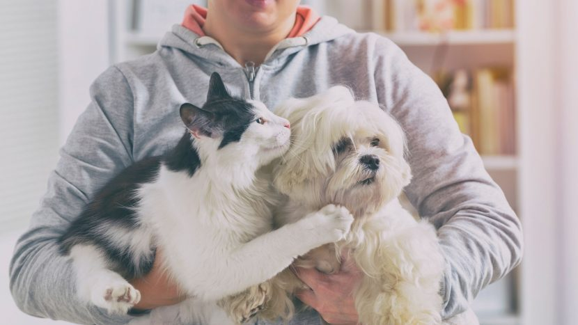 indoor and outdoor safety tips for dogs and cats